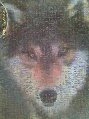 1000 Piece Photomosaic Puzzle of Face of Grey Wolf