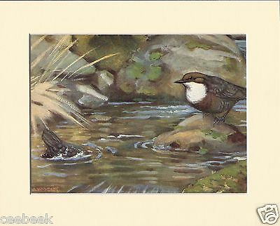 Dippers Mounted 1930s Bird Print Black Cream or White Mounts