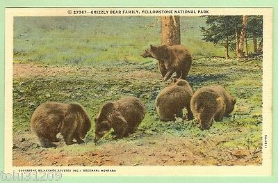 Vintage Linen PC ©27367-Grizzly Bear Family, Yellowstone National Park/up