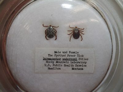 Vintage Rocky Mountain Spotted Fever TICKS Lab Specimen Glass Paperweight