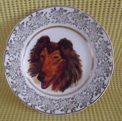 COLLIE / SHETLAND SHEEPDOG Hand painted dog on 6 inch plate