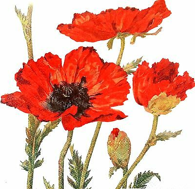 4 Single Lunch Paper Napkins Craft for Decoupage Decopatch Vintage Red Poppies