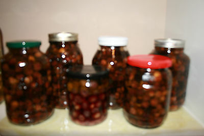 Hand-picked Homemade Organic Pickled Olives Mediterranean Style 8oz 16oz or 32oz