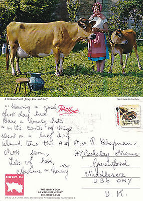 1990's JERSEY COW CALF & MILKMAID JERSEY CHANNEL ISLANDS COLOUR POSTCARD