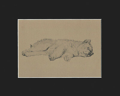 Chow-Chow Puppy Dog Asleep by Cecil Aldin LARGE Print 1934