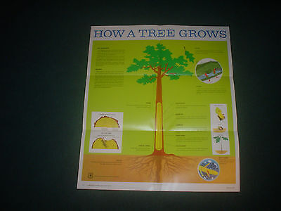 """US FOREST SERVICE POSTER HOW A TREE GROWS 2006 21"""" x 24""""  GOVERNMENT PRINTING OF"""