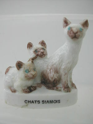 Fève - CHAT CHATS SIAMOIS