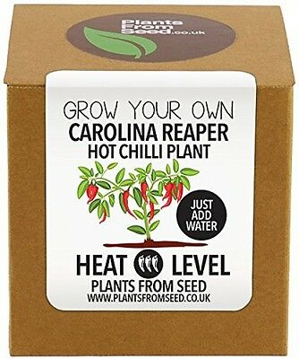 Plants From Seed Grow Your Own Carolina Reaper Chilli Plant Kit