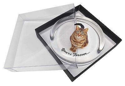 Tabby Cat 'Yours Forever' Glass Paperweight in Gift Box Christmas Pres, AC-167PW