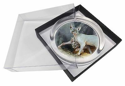Sphynx Cat Glass Paperweight in Gift Box Christmas Present, AC-24PW