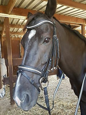 GENUINE LEATHER Horse DIAMANTE Bling Bridle Full Size FREE BLACK REIN Included