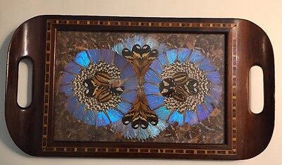 Brazilian Iridescent Butterfly Wing Art Serving Wood Tray Inlay Border Morpho