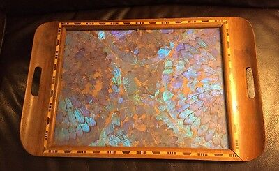Brazil Iridescent ALL MORPHO BUTTERFLY WINGS Art Serving Wood Tray Inlay Border