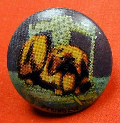 Vintage PEKINGESE DOG Pinback Button 20mm Pin ME4121