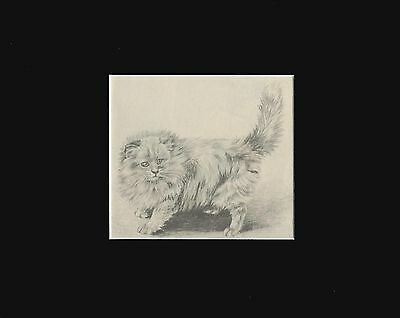 FLUFFY KITTEN Cat Print 1942 by Marguerite Kirmse  8X10 Mat VINTAGE