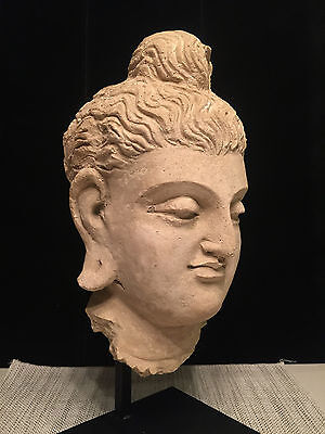 Authentic 5th Century A.D. Large Gandhara Buddha Head, Stucco
