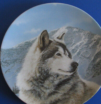 Solitary Watch ~  Wolf plate ~   Malamute snow mountains husky