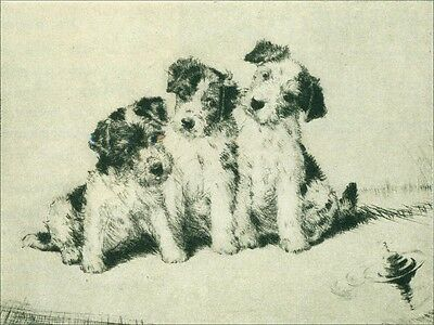 Jack Russell Terrier Puppies 1937 by Diana Thorne ~ LARGE New Blank Note Cards