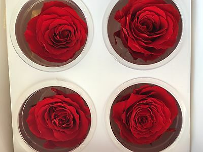 Preserved Roses - 1-3 Year Roses - £1.19 to £2.60 Per Head - NEW - High Quality