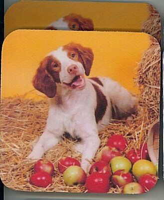 BRITTANY SPANIEL Rubber Backed Coasters #0901