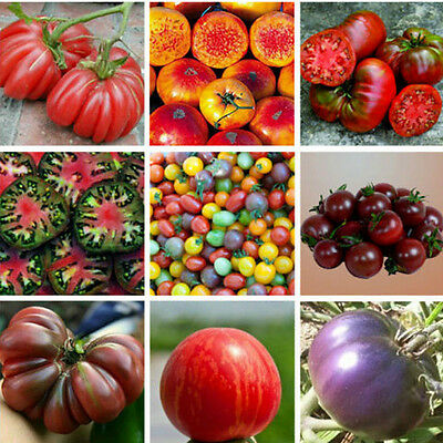 200pcs Set Mixed Tomato Vegetable Fruit Seed Seeds Home Yard Garden Decoration