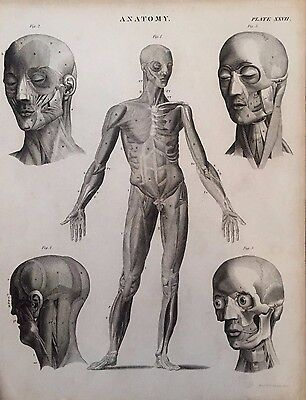19Th Century Anatomy Engravings By G Aikman C.1860