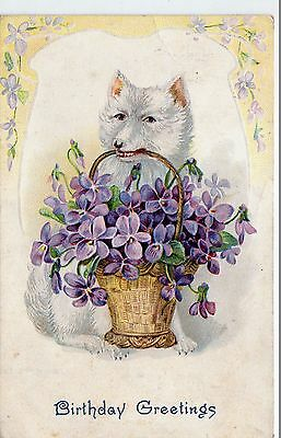 Early 1900's Birthday Greetings Postcard - Selling Lot Of Cards
