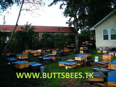 2018 Pre-Sale /one Pound Package Of Bees With Mated Vshbh Queen-Ships 4/15/18