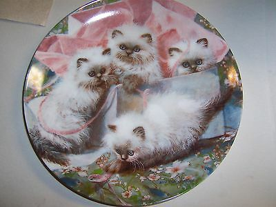 """Knowles """"All Wrapped Up Himalayans"""" Himalayan Cat Collector Plate"""
