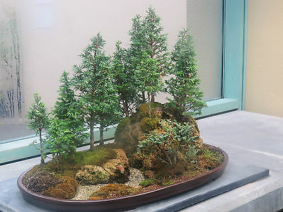 Rare Bonsai, Japanese Bonsai Tree Seeds, Uk Stock 10 Seeds