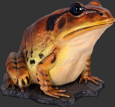 Great Barred Frog Giant