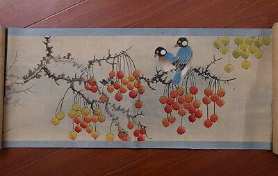 Very Long Rare Old Chinese Scroll  Hand Painting Birds Marked ZhangXiong PP689
