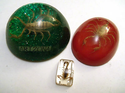 Real SCORPIONS in Acrylic Paperweights