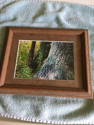 """Wildlife Nature Photo Photograph Eastern Chipmunk 8"""" by 10"""" Framed Matted Print"""