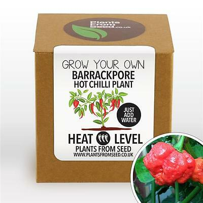 Plants From Seed - Grow Your Own Barrackpore Chilli Plant Kit
