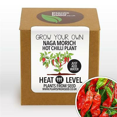 Plants From Seed - Grow Your Own Naga Morich Chilli Plant Kit
