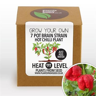 Plants From Seed - Grow Your Own Brain Strain Chilli Plant Kit