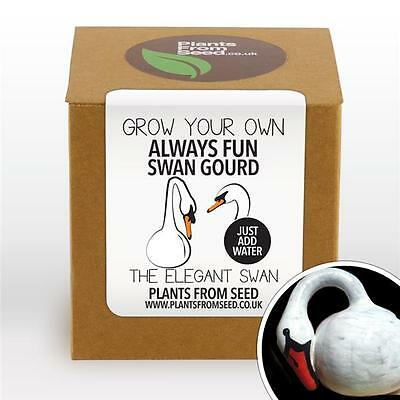 Plants From Seed - Grow Your Own Swan Gourd Plant Kit