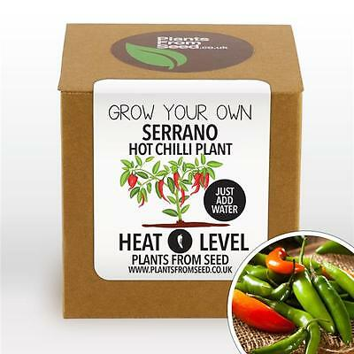 Plants From Seed - Grow Your Own Serrano Chilli Plant Kit