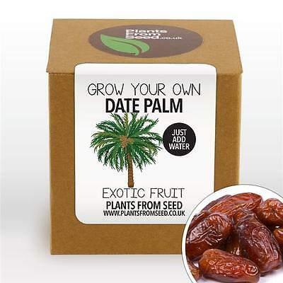 Plants From Seed - Grow Your Own Date Palm Plant Kit