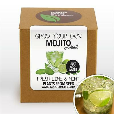 Plants From Seed - Grow Your Own Mojito Cocktail Plant Kit
