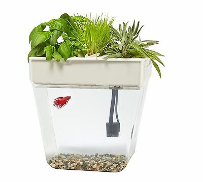 Back to the Roots Water Garden Fish Tank Deluxe