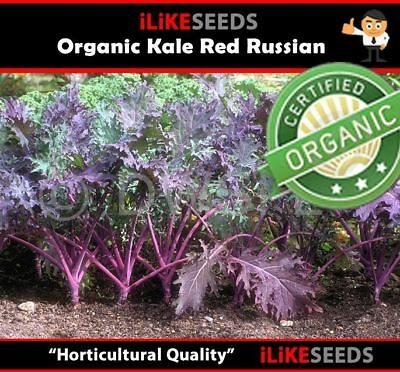 "ORGANIC Kale ""Red Russian"" 100 Seeds Minimum. Vegetable Garden Plant."