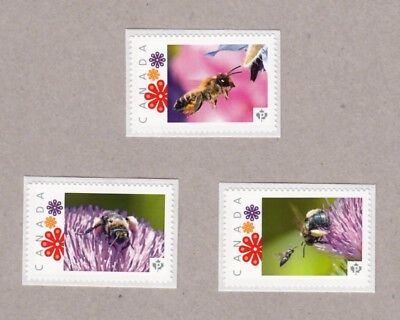 BEE, WASP, Set 3 UNIQUE Picture Postage MNH stamps Canada 2016 [p16/08be3]