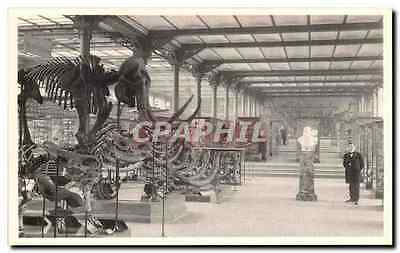 CPA Bruxelles Musee Royal d histoire naturelle Galeries nationales Mammouths