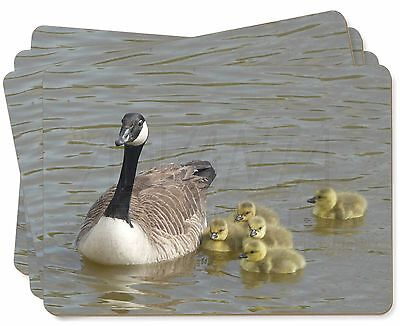Canadian Geese and Goslings Picture Placemats in Gift Box, AB-G1P