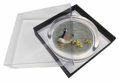 Canadian Geese and Goslings Glass Paperweight in Gift Box Christmas Pre, AB-G1PW