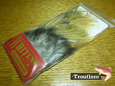 Whiting Farms Coq De Leon Light Ginger Pardo Tailing Pack New Flytying Feathers