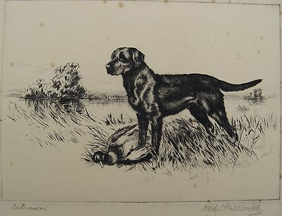 Signed Original RBE Woodhouse Etching of a Labrador c.1920