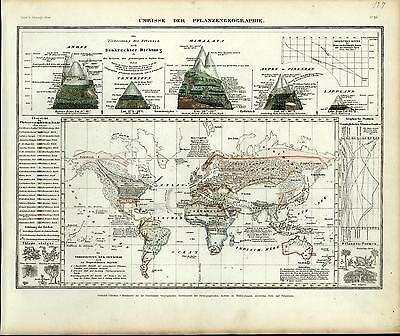 World climates mountain elevations plants weather c.1850 antique German map